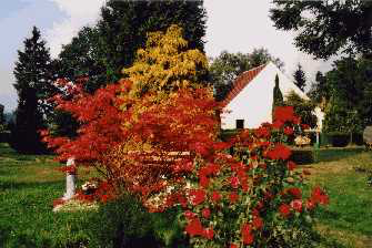 Farbenfrohe Büsche auf dem Friedhof
